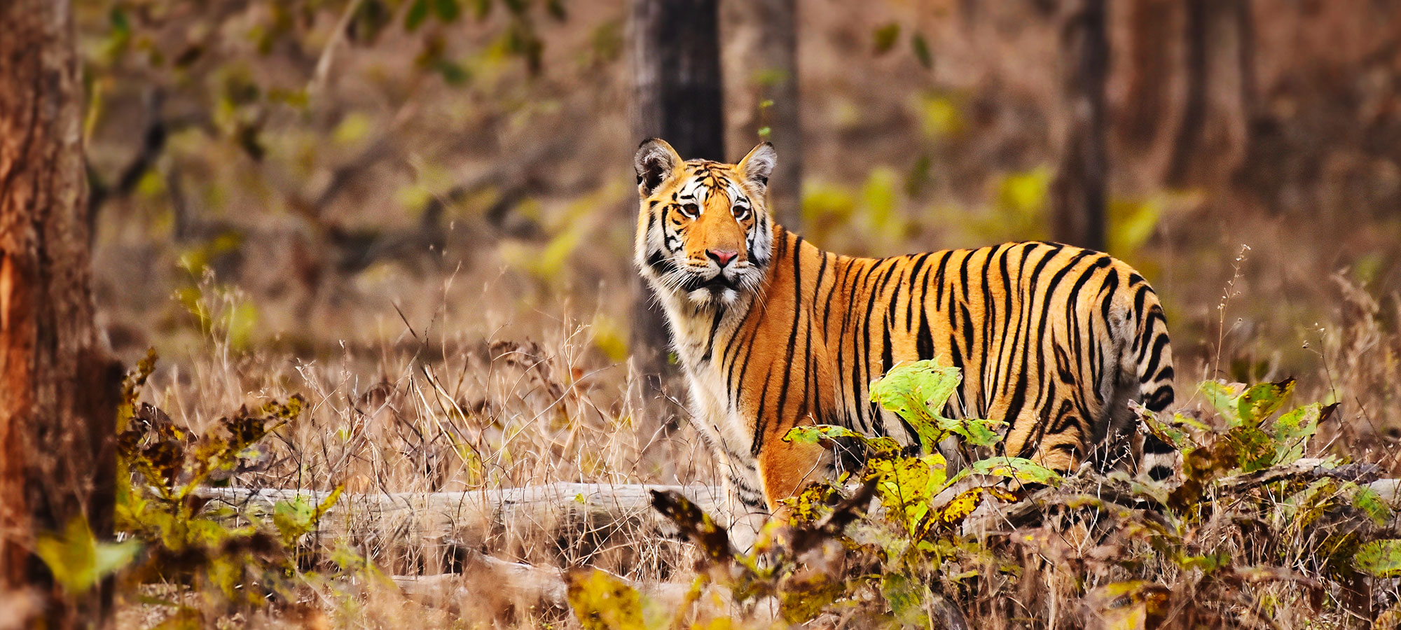 pench-park-img6