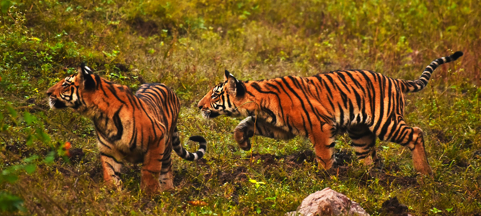 pench-park-img8